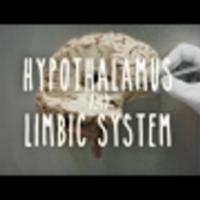 Hypothalamus and Limbic System - UBC Neuroanatomy - Season 1 - Ep 4