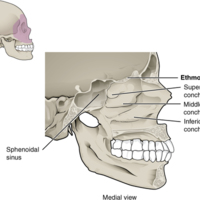 Lateral Wall of Nasal Cavity