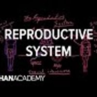 Reproductive system physiology